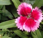 Belleza en su pico Foto de archivo libre de regalías
