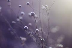 Belleza fría Fotografía de archivo