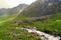 Belleza imponente de la naturaleza en Kirguistán foto de archivo
