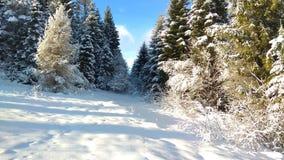 Belleza inolvidable del bosque del invierno fotografía de archivo