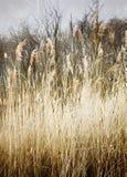 Belleza lateral del país Foto de archivo libre de regalías