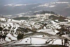 Belleza modelada de las terrazas del arroz Imagen de archivo