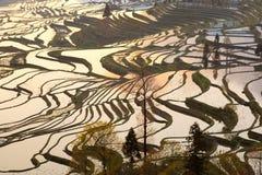 Belleza modelada de las terrazas del arroz Foto de archivo libre de regalías
