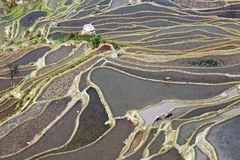 Belleza modelada de las terrazas del arroz Imágenes de archivo libres de regalías
