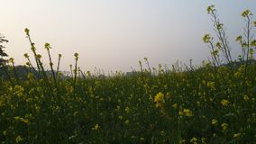 Belleza natural Imagen de archivo
