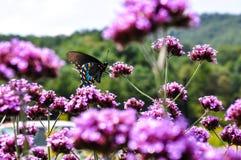 Belleza natural Imagen de archivo libre de regalías
