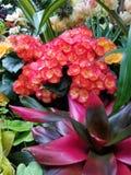 Belleza natural de las flores fotografía de archivo libre de regalías