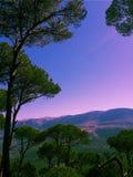 Belleza púrpura Imágenes de archivo libres de regalías