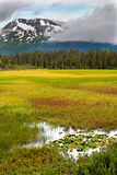 Belleza, pantano y montañas de Alaska Foto de archivo libre de regalías