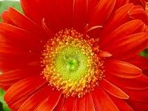 belleza Rojo-hecha frente Imagen de archivo libre de regalías