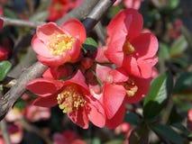 Belleza rosada Foto de archivo