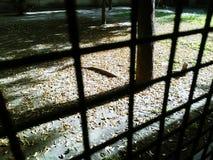 Belleza silenciosa Imagen de archivo libre de regalías