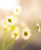 Belleza suave de las flores