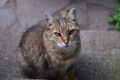 Belleza a través de los ojos de los gatos sin hogar de Nueva York Foto de archivo libre de regalías
