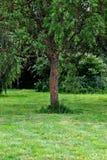 Belleza tres del verde de la naturaleza imagenes de archivo