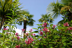 Belleza tropical Imagen de archivo libre de regalías