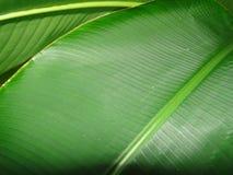 Belleza y vitalidad naturales de las hojas de las plantas Fotografía de archivo libre de regalías