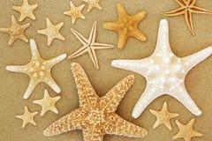 Bellezas de las estrellas de mar en la arena imagen de archivo libre de regalías