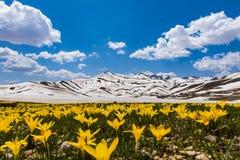 Bellezas de primavera de la cumbre en las montañas Foto de archivo