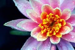 Bellezza acquatica Fotografie Stock