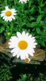 Bellezza bianca! fotografie stock libere da diritti