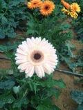 bellezza bianca a Genting Fotografie Stock