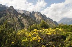 Bellezza caucasica nelle montagne dove fiori gialli del tsyet sui precedenti delle rocce taglienti e di belle nuvole Immagine Stock Libera da Diritti