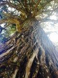 Bellezza degli alberi Fotografia Stock Libera da Diritti