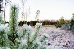 Bellezza dei colori di inverno Otanki, Lettonia fotografie stock