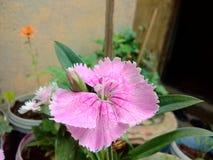 Bellezza dei fiori Fotografia Stock Libera da Diritti