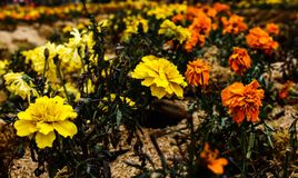 Bellezza dei fiori Fotografia Stock