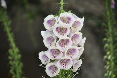 Bellezza dei fiori freschi della fine di estremo della foglia di verde della natura su Immagine Stock