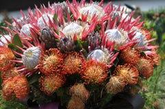 Bellezza dei fiori freschi della fine di estremo della foglia di verde della natura su Immagini Stock Libere da Diritti