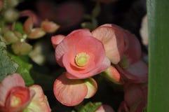 Bellezza dei fiori freschi della fine di estremo della foglia di verde della natura su Immagini Stock