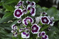 Bellezza dei fiori freschi della fine di estremo della foglia di verde della natura su Fotografie Stock Libere da Diritti