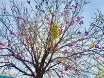 Bellezza dei fiori dei season's di estate e della primavera sugli alberi Immagine Stock