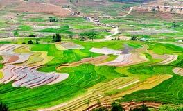 Bellezza dei giacimenti a terrazze del riso della gente etnica di H'Mong alla stagione trasnplanting Fotografia Stock Libera da Diritti