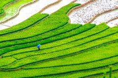 Bellezza dei giacimenti a terrazze del riso della gente etnica di H'Mong alla stagione trasnplanting Fotografia Stock