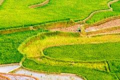 Bellezza dei giacimenti a terrazze del riso della gente etnica di H'Mong alla stagione trasnplanting Immagine Stock Libera da Diritti