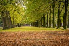 Bellezza dei paesaggi di autunno Immagini Stock