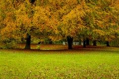 Bellezza dei paesaggi di autunno Fotografia Stock
