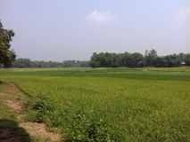 Bellezza del Bangladesh immagine stock