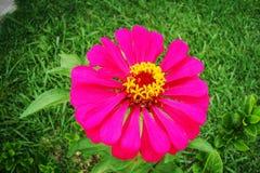Bellezza del fiore Immagini Stock