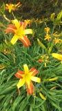 Bellezza del fiore Fotografia Stock