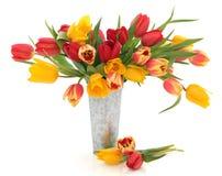 Bellezza del fiore del tulipano Fotografia Stock Libera da Diritti
