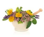 Bellezza del fiore dell'erba Immagine Stock Libera da Diritti