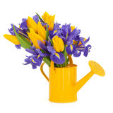 Bellezza del fiore dell'iride e del tulipano Immagine Stock