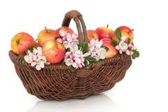 Bellezza del fiore e del Apple fotografia stock