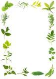 Bellezza del foglio dell'erba Fotografia Stock