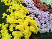 Bellezza del giardino immagini stock